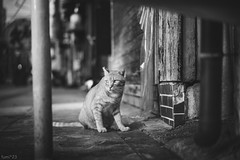 猫 (fumi*23) Tags: ilce7rm3 sel55f18z 55mm sonnartfe55mmf18za sonnar a7r3 animal alley katze cat chat gato neko monochrome bw blackandwhite モノクロ ねこ 猫 ソニー