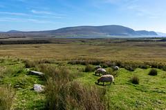_ROS7140-Edit.jpg (Roshine Photography) Tags: desertedvillage irelandvacation countymayo achillisland slievemore ireland