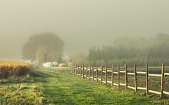 In the Light of the Autumn Sun (Netsrak) Tags: baum bäume eu eifel europa europe forst landschaft natur nebel fog landscape mist nature