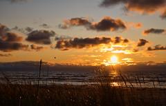 An evening stroll before work (Nov 11, 2019). (ms.gulbis) Tags: liepaja balticsea sun sunset clouds sea seashore seascape evening beach baltic november