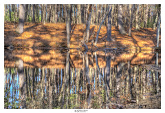 Reflection (Pearce Levrais Photography) Tags: landscape lake leaf leaves tree trees trunk sony a7r3 hdr outside outdoor thebestofhdr pond water reflection