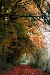 Walk along the forest (juliendumont2) Tags: tree forest woods outdoors colors autumn season morning orange trunk path countryside nature naturephotography mothernature landscape noperson fineart canon belgium amomentintime greenscene inexplore