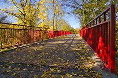Rotes Geländer (KaAuenwasser) Tags: rot rotesgeländer geländer farbe bauwerk brücke karlsruhe kräftig herbst herbstlich laub blätter blatt gelb bunt baum bäume ahorn licht schatten november 2019