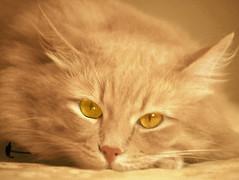 Beautiful Blonde Bobbie (ron-charles) Tags: intense gorgeous smart crafty