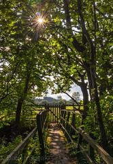 Decieving the viewer. (Darren Speak) Tags: rays trees summer scenery britain peaceful exposure canoneosm yorkshire 2019 lightroom sunshine
