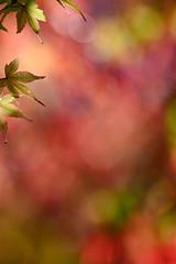 L'eau tonne - 09 (Stéphane Barbery) Tags: automne japan japon kyoto momiji 京都 日本