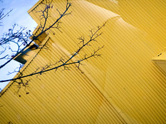 Yellow building clad in corrugated metal with black branches on Granville Island in Vancouver, Canada (albatz) Tags: yellow wall building clad corrugated metal blackbranches granville island vancouver canada