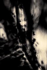 L'eau tonne - 17 (Stéphane Barbery) Tags: automne japan japon kyoto momiji 京都 日本
