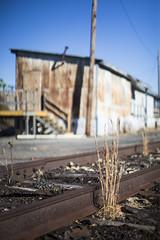 rails (eb78) Tags: appalachia wv westvirginia parkersburg ue urbex urbanexploration decay abandoned rails railroad traintracks