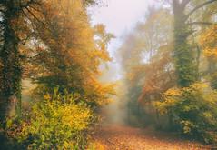 Colors of Autumn (ceca67) Tags: autumn fall nature forest trees colors path walk switzerland svetlanaperic
