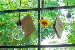 Throwback to summer time (Michael LeHai) Tags: flower books light green summer saigon vietnam sony sel35 alphaa6000 sunflower