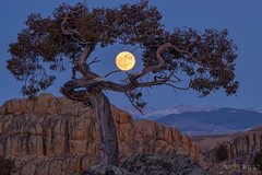 IMGP3617-Edit.jpg (Matt_Burt) Tags: moonrise fullmoon moon hartmanrocks sunset juniper tree