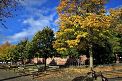 Autumn trees at Chester (Tony Worrall) Tags: welovethenorth nw northwest north update place location uk england visit area attraction open stream tour country item greatbritain britain english british gb capture buy stock sell sale outside outdoors caught photo shoot shot picture captured ilobsterit instragram autumn fall leaves chester cheshire trees fallenleaves golden leaf nature natural season beauty dailyphoto photohour