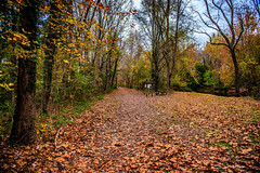 Far Far Away. (Igor Danilov Philadelphia) Tags: walk autumn november fall dog human far park nj ewing ahead see them find man