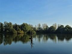 Reflets dans les étangs des ballastières à Aire sur la Lys. (daviddelattre) Tags: eau nature paysage photo ciel bleu arbre reflet