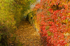 Along the wall (a7m2) Tags: autumn vienna liesing austria blätter laub kellerberg spazieren joggen laufen wandern hunde stadtrand herbst