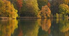 Autumn splendor (Croix-roussien) Tags: lyon france autumn tree nature reflection reflet gold or eau water lake parcdelatêtedor ngc