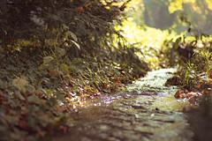 Italy - Arcore (SergioQ79 - Osanpo Photographer -) Tags: italy italia arcore autumn autunno leaf leaves foglie nikon d7200 2019