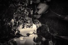 L'eau tonne - 16 (Stéphane Barbery) Tags: automne japan japon kyoto momiji 京都 日本