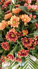 IMG_1036 (Maurizio Masini) Tags: banqueting restorant hotel fiore fiori flower flowers flores flore