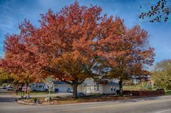Simply Gorgeous (kendoman26) Tags: hdr nikhdrefexpro2 oaktree tree autumn autumncolors fall fallcolors sonynex sonynex3n selp1650 morrisillinois