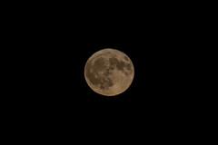 Full moon of November 2019 rising through clouds over the village of Kornelimunster near Aachen on November 12, 2019 (X-Andra) Tags: astonomy german germany autumn beavermoon frostymoon full moon night sky aachen northrhinewestphalia