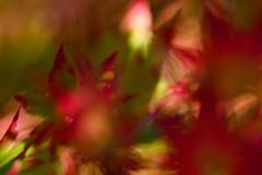 L'eau tonne - 11 (Stéphane Barbery) Tags: automne japan japon kyoto momiji 京都 日本