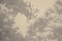 L'eau tonne - 15 (Stéphane Barbery) Tags: automne japan japon kyoto momiji 京都 日本