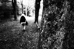 White-haired (Ricoh GR1) (stefankamert) Tags: film analog analogue forest whitehaired stefankamert 0919 trees mysterious mood textures light blur blurry dof ricoh gr ricohgr grain 28mm wideangle blackandwhite blackwhite bw noir noiretblanc kodak trix