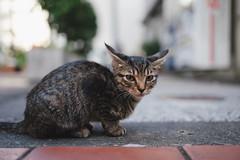 猫 (fumi*23) Tags: ilce7rm3 sony sel35f18f 35mm emount fe35mmf18 feline a7r3 alley animal cat chat gato katze neko kitten kitty ねこ 猫 ソニー