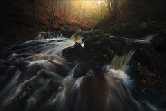 [ ... autumnal stream ] (D-P Photography) Tags: landscape landschaft autumn herbst color colors stream river woods waterfall season mood light sunrise sun green yellow dennispolkläser dpphotography feisol haida
