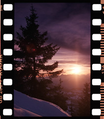 Tree (Kodak Gold 200) (mmartinsson) Tags: sprocketholes digitalizascanningmask analoguephotography scannegative nikonf3 nikkor50mmf14 gb2007 epsonperfectionv700 kodakroyalgold 35mm film kodak wildschönau tyrolen österrike