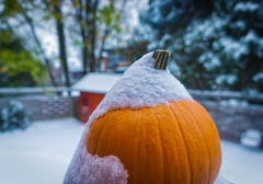 Winter is coming. (@magda627) Tags: bokeh coth5 composition color winter nature outdoor fall orange light garden plant edit autumn snow sony gameofthrones white lightroom detail flickrsbest