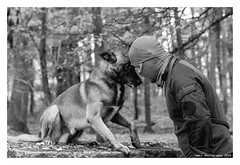 """Un Jour Au RAiD... Servir Sans Faillir 14"" (TBWLC Photography) Tags: fdrouet tbwlc raid chien dog cane perro police nb bw monochrome nikon d610 portrait retrato"