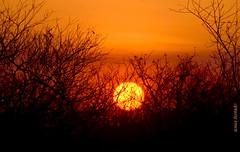 Quarta-sunset (sonia furtado) Tags: quartasunset sunset pds pordosol contraluz paraíba ne brasil brazil soniafurtado