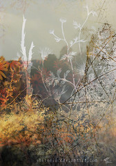Fairytale abstraction 3 (lwbttupo31) Tags: abstraction autumn dream fairytale flowers meadow nature photomanipulation surreal abstract