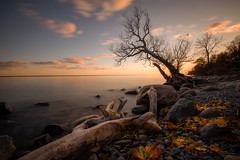 Autumn on the lake shore (Marc McDermott) Tags: autumn fall shore lake sunset tree drift wood leaves water clouds longexposure beach rocks ontario canada pickering