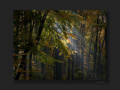 Bathed in loving light ((Oden) WALD-Fotograf) Tags: wald licht herbst autumn fall forest baum odenwald hessen