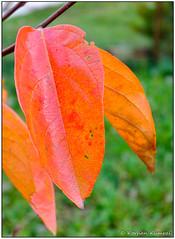 DSCF0702-2.jpg (DrOpMaN®) Tags: autumn fujinon landscape korhankumral on1effects fujinonxc1650mmf3556ois flowersplants fuji xc1650mm xe2 xc1650mmf3556ois fujifilm m43turkiye