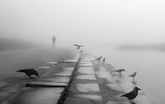 A mystical scene with the crows (sharmi_diya06) Tags: travel street streetphotography streetphot abstract morning birds people