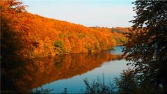 Autumn colors at the Lake Uklei (Ostseetroll) Tags: deu deutschland geo:lat=5418280006 geo:lon=1062866121 geotagged schleswigholstein sielbeck ukleisee herbst autumn see lake spiegelungen reflections olympus em5markii