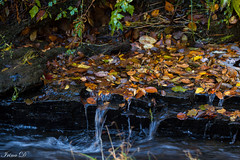 Flowing autumn (Irina1010) Tags: water creek stream leaves fallen autumn foliage season nature canon coth5
