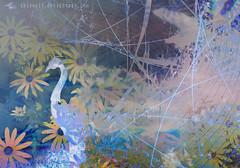 Fairytale abstraction 2 (lwbttupo31) Tags: abstraction blue dream fairytale flowers grey magic peacock sky surreal yellow abstract photomanipulation