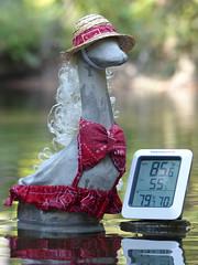 Gosling in creek (wwimble) Tags: gosling bikini warm rockyforkcreek hat hot keepingcool
