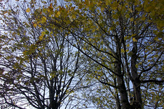 Autumn (Flower of the Woods) Tags: autumn wales uk nature season trees branches leaves sky