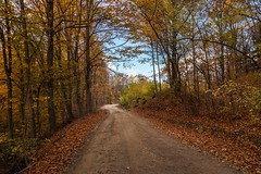 November (dorinser) Tags: autumnleaves autumncolours road forest november romania