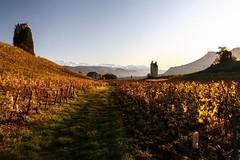 Dans les vignes d'automne (Fab. A) Tags: sunset château ruines paysage automne savoie chignin vignes vineyard