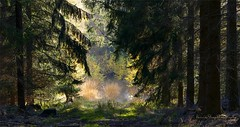way into the light (Harald Steeg) Tags: oberlausitz czorneboh sachsen wald licht schatten herbst