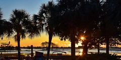 Sunrise (jimpillion) Tags: murrellsinlet sunrise southcarolina nature palm georgetowncounty