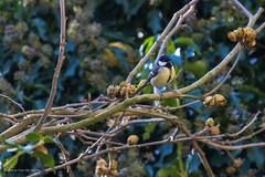 Tuinvogels (Cheetah_flicks) Tags: animals bird dieren huis koolmees mees nature natuur tuin vogel vrijenatuur wildlife